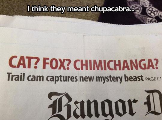 Mystery beast…