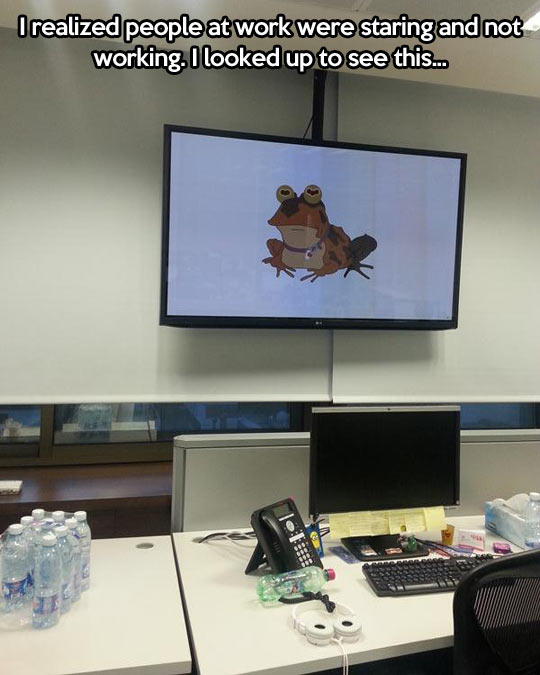 funny-office-screen-frog-staring