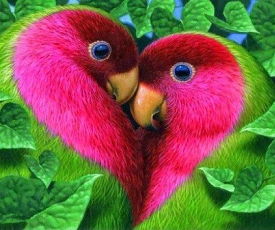 funny-parrots-heart-birds-love
