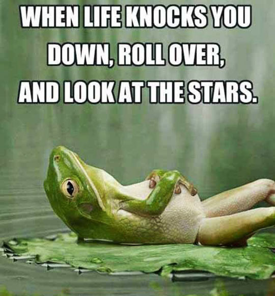 When life knocks you down…