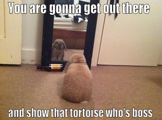 This is what that rabbit is thinking about…