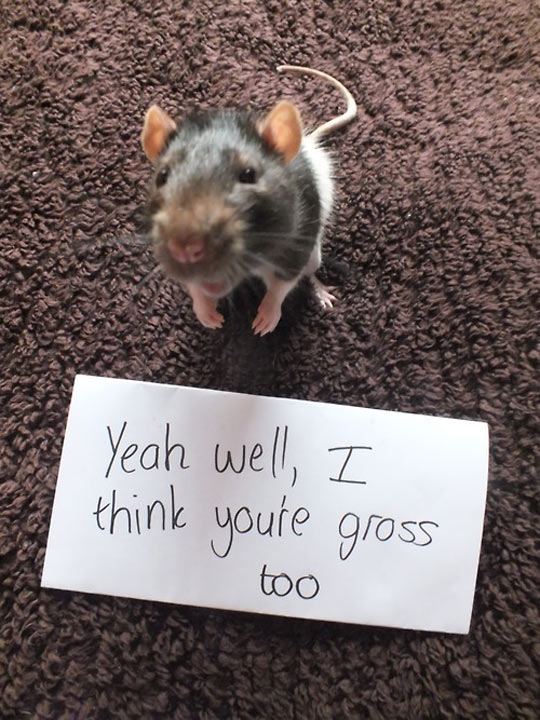 Rats are gross…