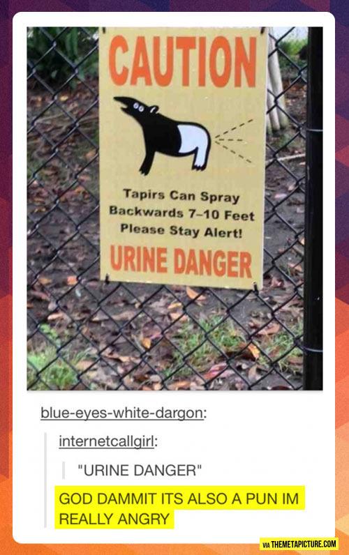 Beware of tapirs…
