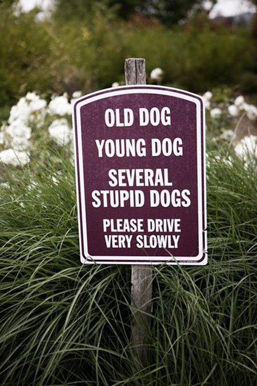 funny-sign-dog-several-grass