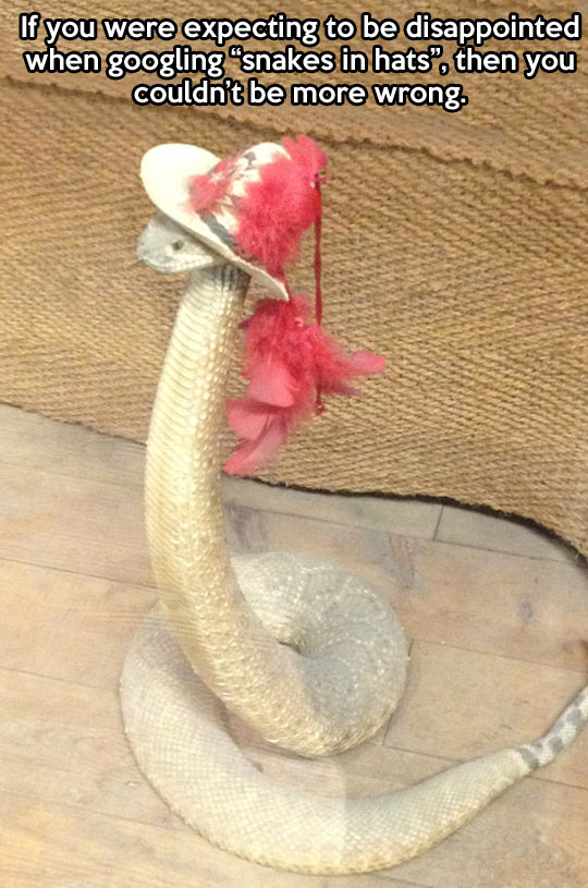 Snakes in hats…