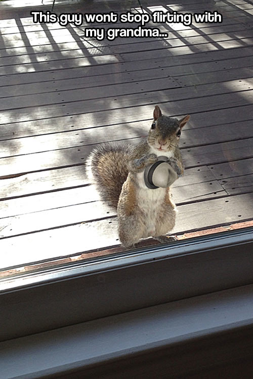 Wooing squirrel…