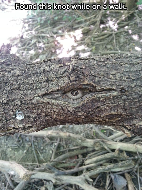 The tree is watching me…
