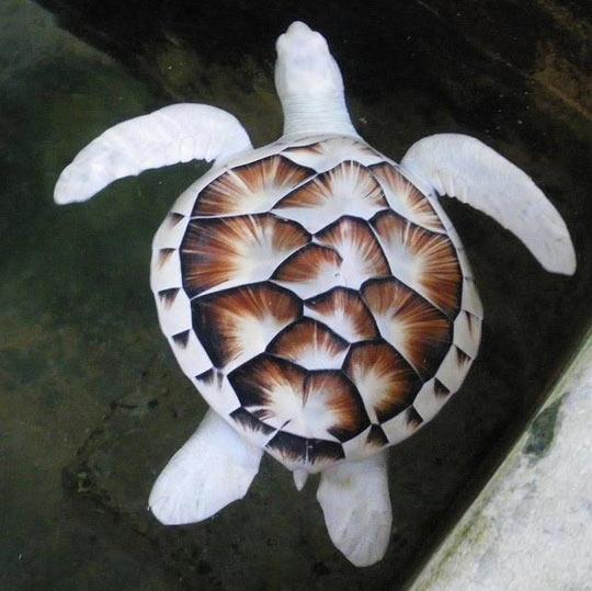 funny-turtle-sea-white-zoo-water
