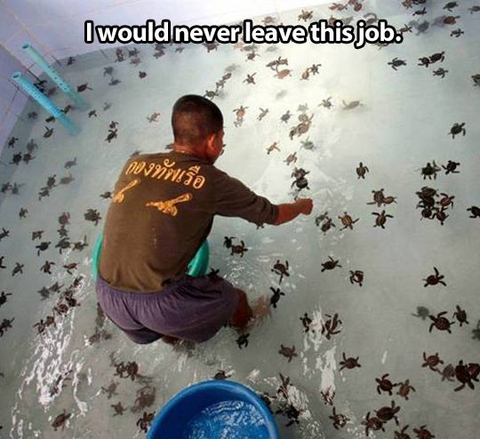Working with baby turtles…