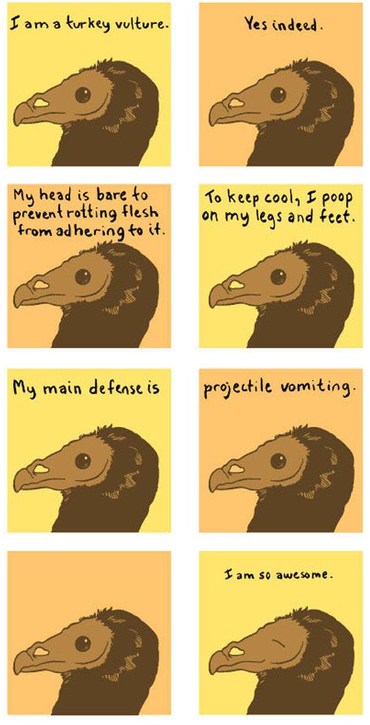 The turkey vulture…