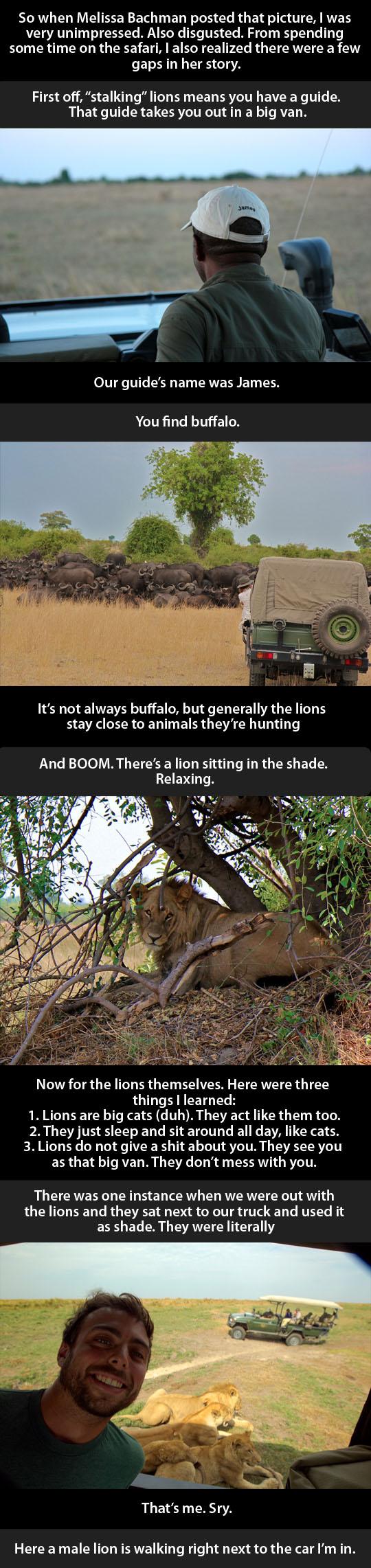 lion-Africa-hunter-car-wild