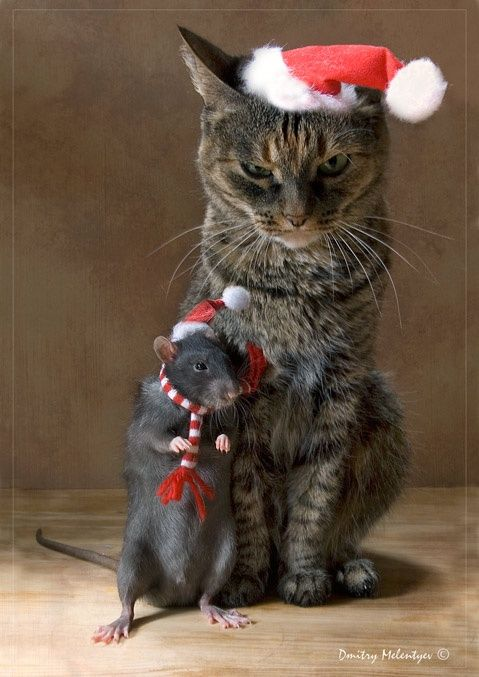 14 More Holiday Pets1