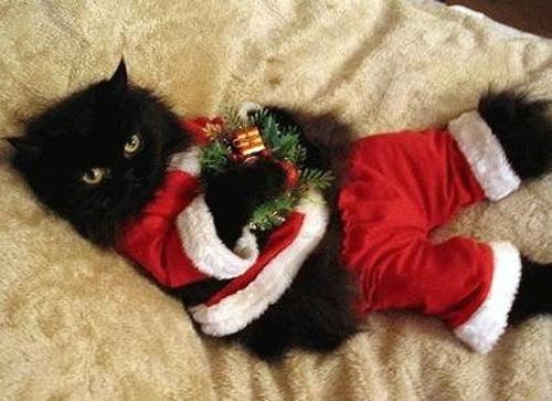 14 More Holiday Pets10