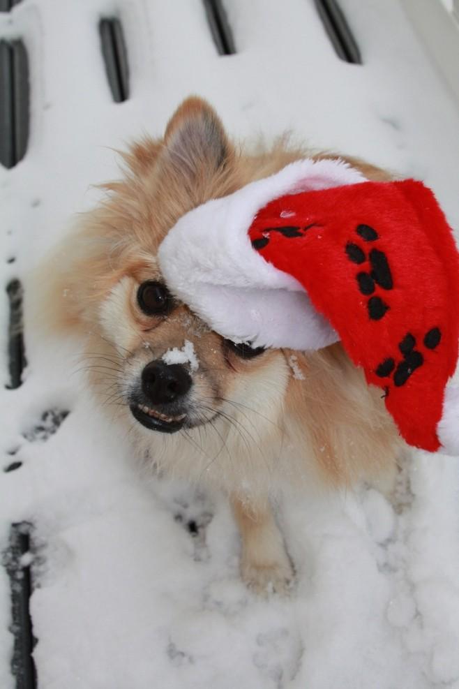 14 More Holiday Pets11