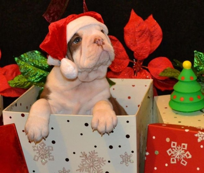 14 More Holiday Pets13