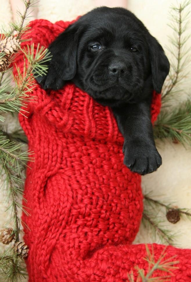 14 More Holiday Pets3