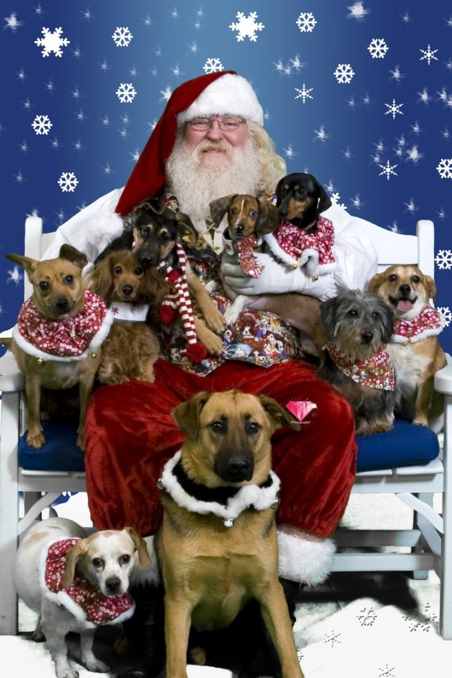 14 More Holiday Pets4