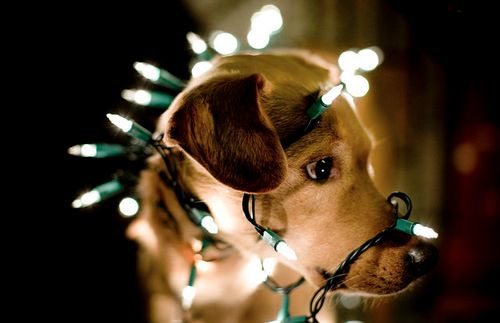 14 More Holiday Pets5