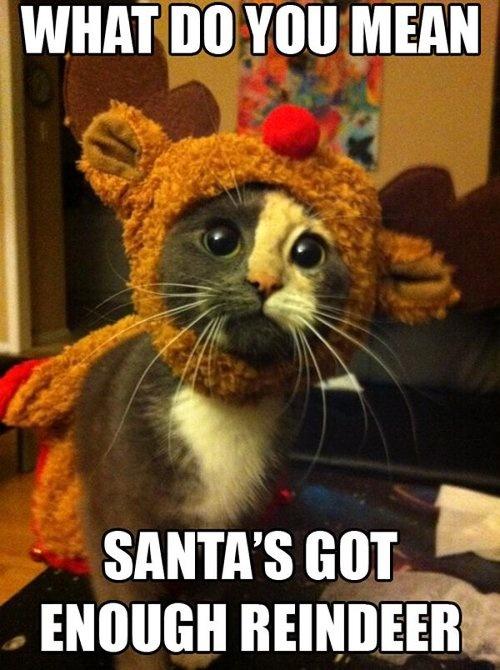 14 More Holiday Pets6