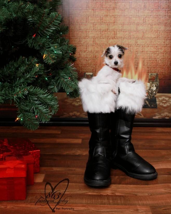 14 More Holiday Pets7