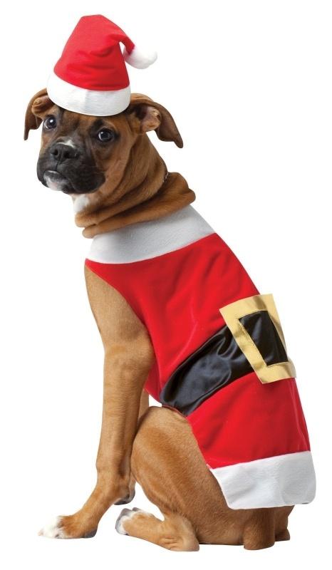 14 More Holiday Pets8