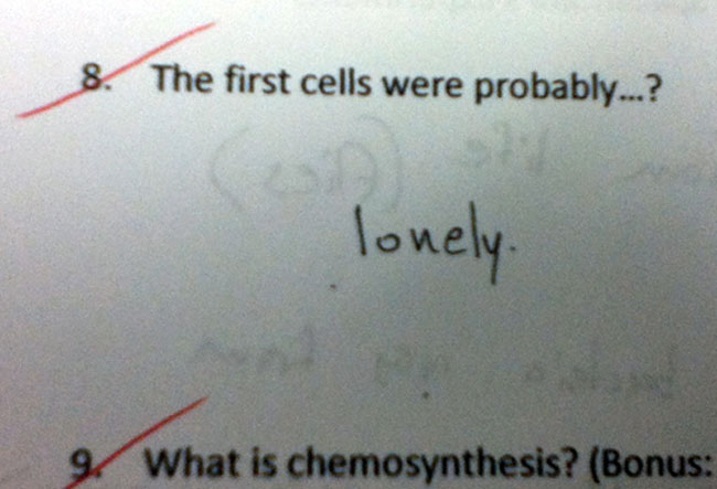 29 Test Answers That Are Totally Wrong But Hilarious2