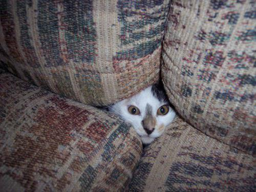 Animals That Suck at Hide and Seek (15 pics)14