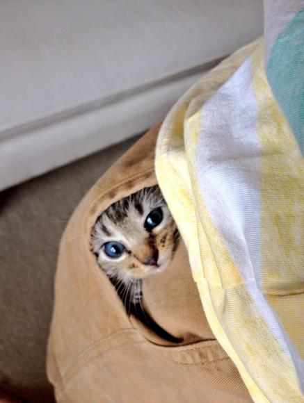 Animals That Suck at Hide and Seek (15 pics)2