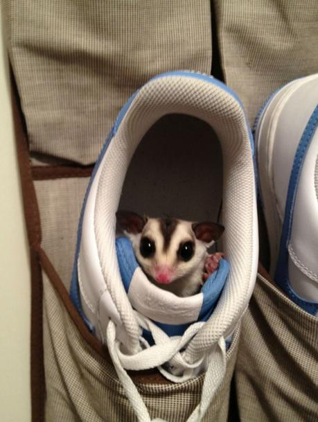 Animals That Suck at Hide and Seek (15 pics)5