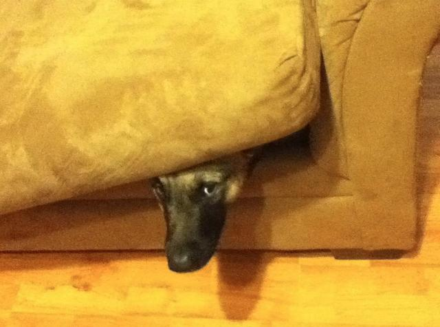 Animals That Suck at Hide and Seek (15 pics)6