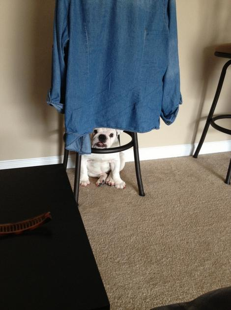 Animals That Suck at Hide and Seek (15 pics)8