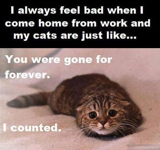 Even More Photos That Only Cat Owners Will Understand…(18 Pics)10