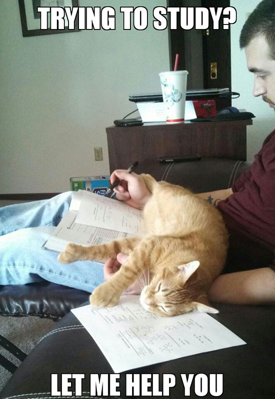 Even More Photos That Only Cat Owners Will Understand…(18 Pics)14