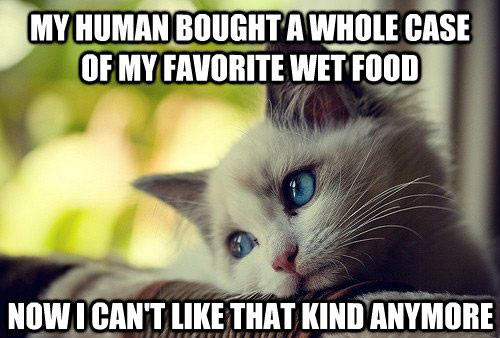 Even More Photos That Only Cat Owners Will Understand…(18 Pics)15