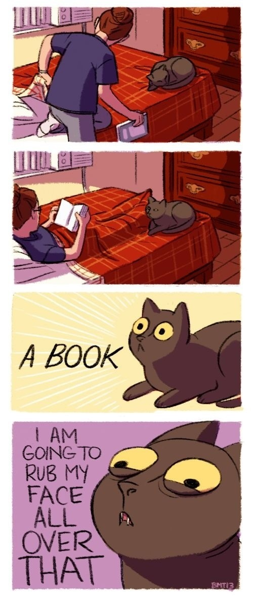 Even More Photos That Only Cat Owners Will Understand…(18 Pics)18