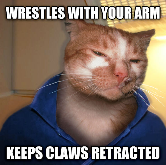 Even More Photos That Only Cat Owners Will Understand…(18 Pics)4