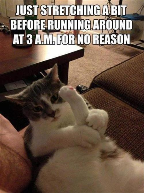 Even More Photos That Only Cat Owners Will Understand…(18 Pics)8