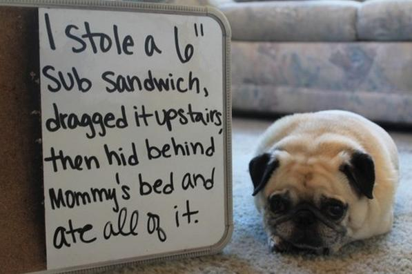 Hey, Pug! What Are You Doing There (13 pics)1