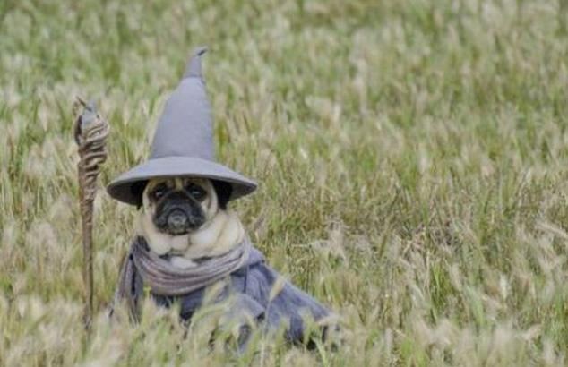 Hey, Pug! What Are You Doing There (13 pics)10