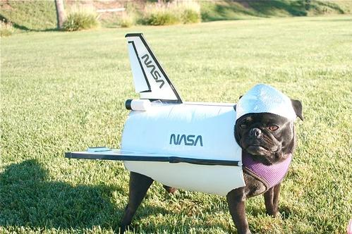 Hey, Pug! What Are You Doing There (13 pics)3
