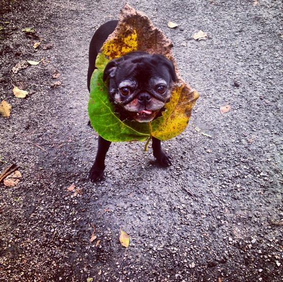Hey, Pug! What Are You Doing There (13 pics)6