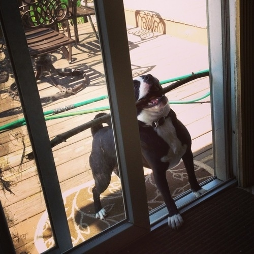 Hilariously-Awkward-Dogs-010