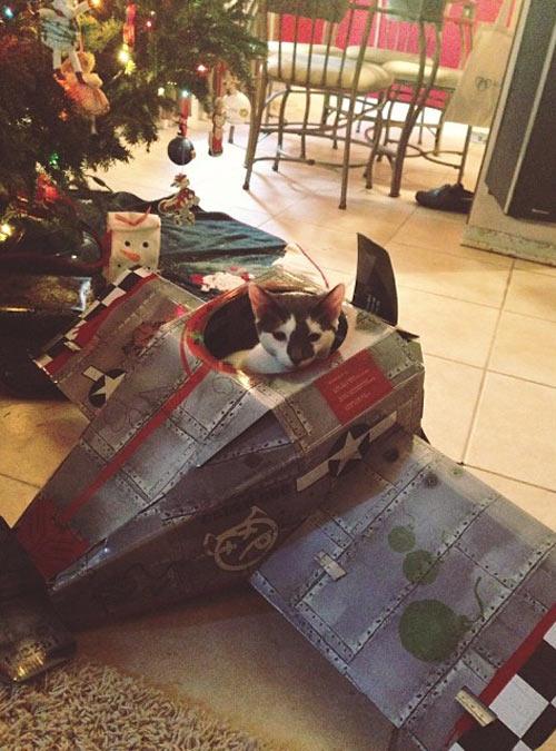 My kitten got his own plane for Christmas