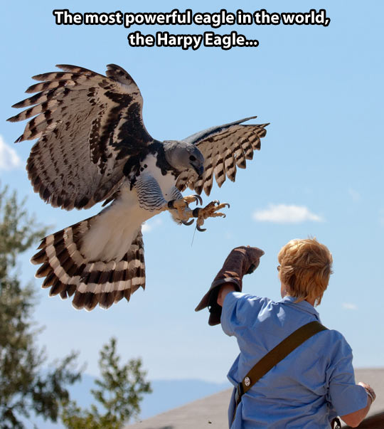 That is a beautiful bird
