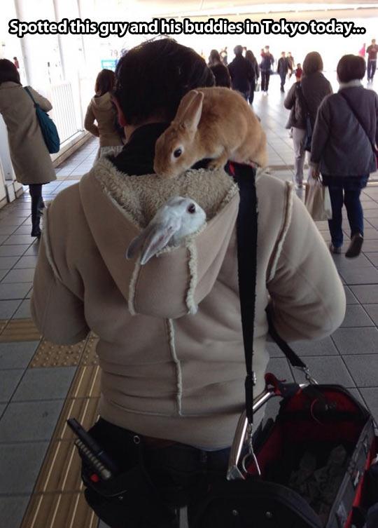 The rabbit whisperer