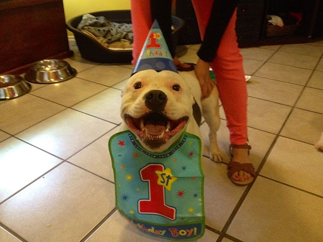 awesome_pet_owners_11