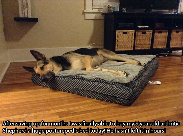 awesome_pet_owners_16