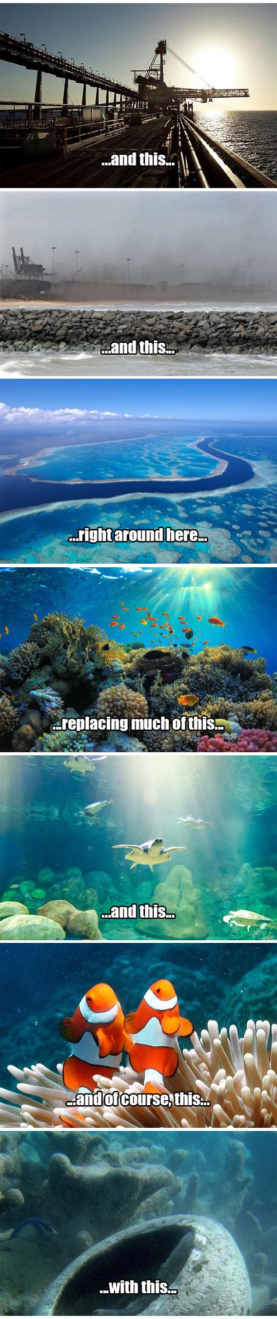 cool-Australia-Coral-reef-destruction-Abbot