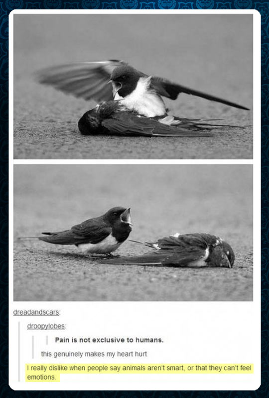 Animals have emotions…