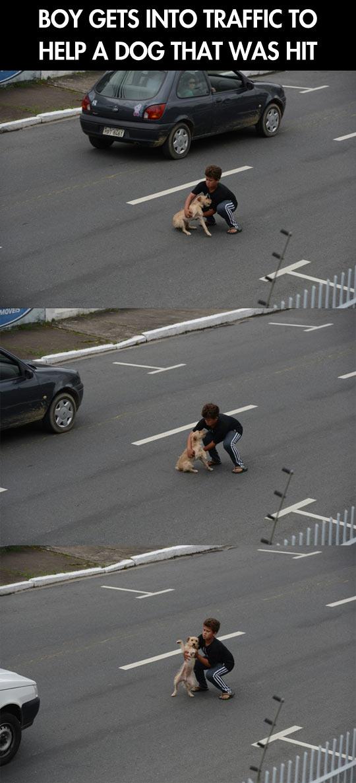 cool-boy-street-dog-car-carrying